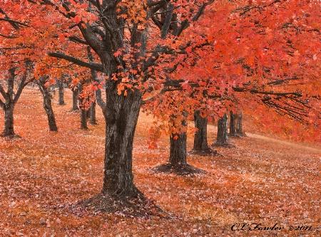 Fall in a Row