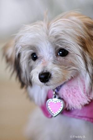 Puppies First Portrait