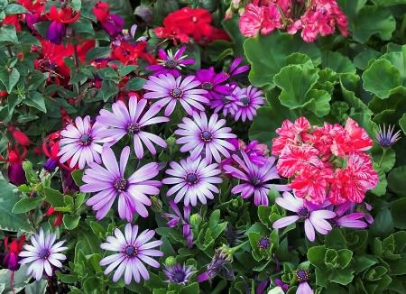 Flora Assortment