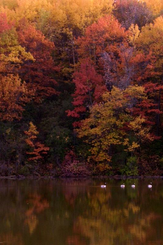 Baker Park in Fall Colors