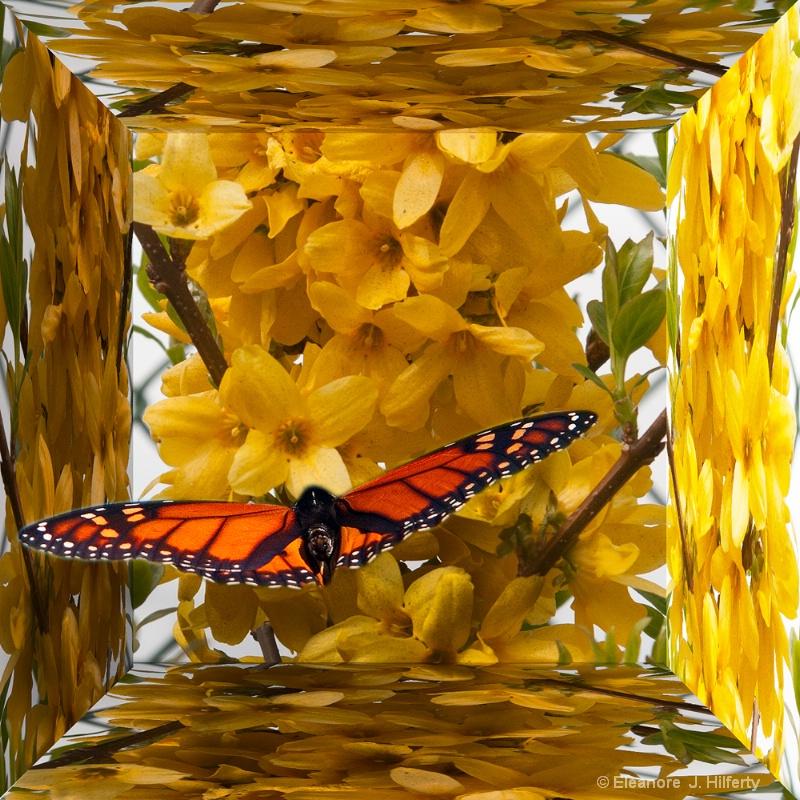 Butterfly in Golden flowers - ID: 12608561 © Eleanore J. Hilferty