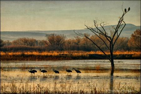 Promenade of the Cranes
