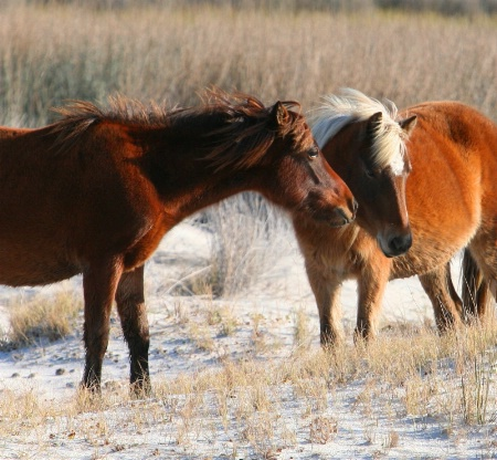 Horse Whispers........