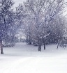 Snowy Morning on ...