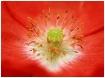 BMJ Flower