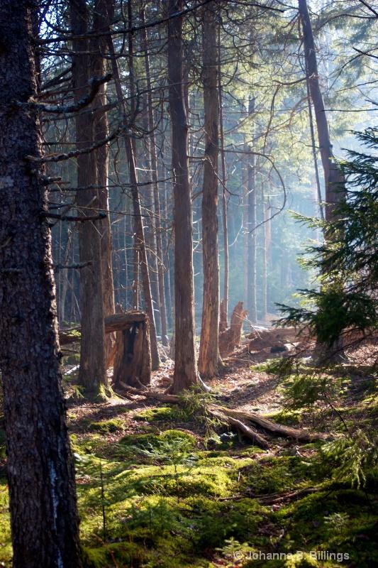 Backlit woods