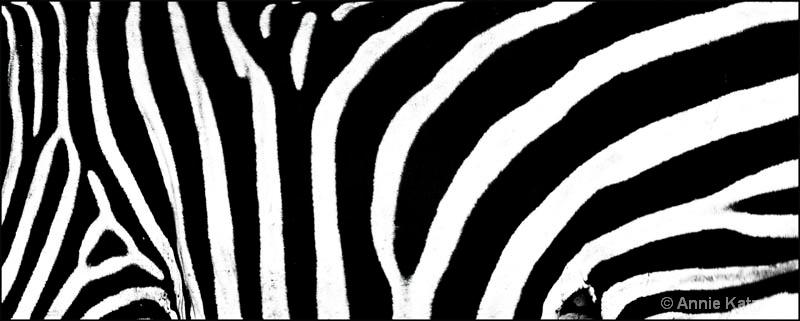 zebra stripes - ID: 12656258 © Annie Katz
