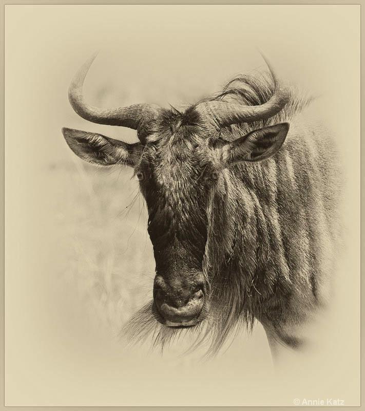 wildebeest - ID: 12656645 © Annie Katz