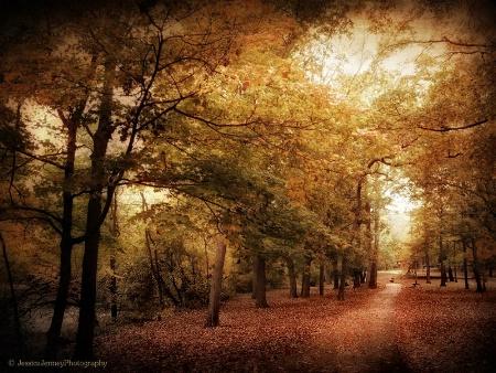 Autumn Corridor