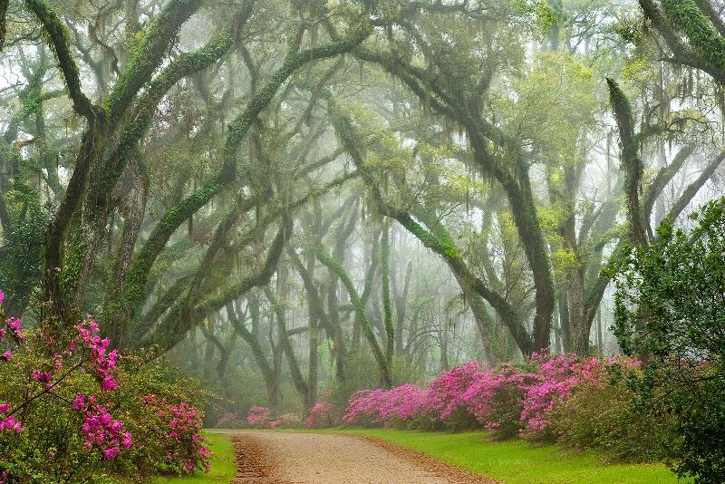 Road to Azaleaville - ID: 12692578 © Kenneth A. Wilson