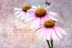 ~ Coneflowers and...
