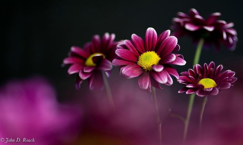 Study in Purple Beauty