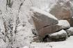 'Winter Rocks...