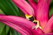 Dart Frog 1201