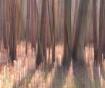 Winter Woods Abst...