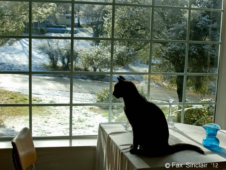 Morning Scene w/ Cat - ID: 12753047 © Fax Sinclair