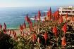 Laguna Beach, Cal...