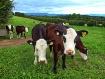<b>+ On the Farm ...