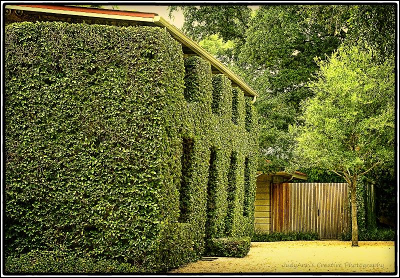 San Antonio Green - ID: 12797639 © JudyAnn Rector