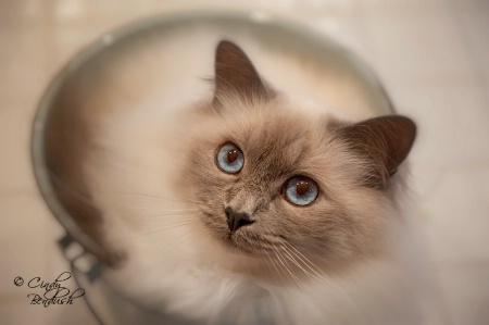 Bailey in a Bucket