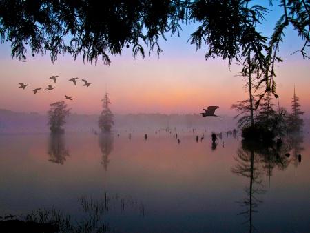 Morning on the Bayou          030812