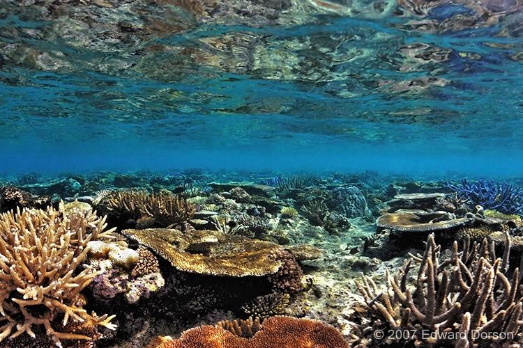 Shallow Reef 3 - ID: 12809922 © Edward Dorson