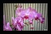 House Flower