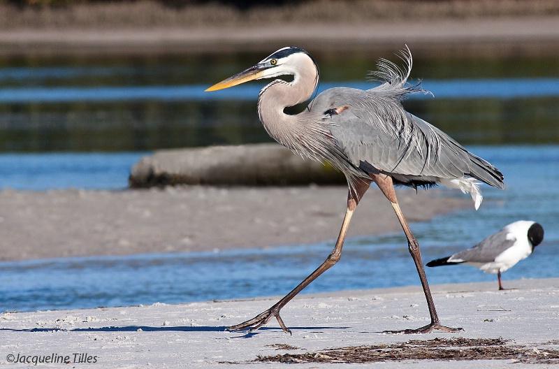 A Stroll on the Beach - ID: 12843066 © Jacqueline A. Tilles