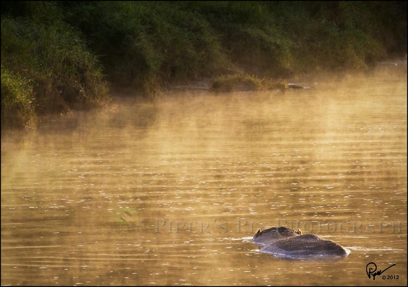 Hippo Spa