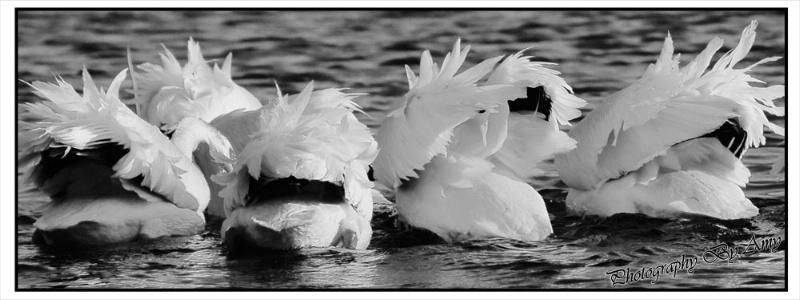 Wind Beneath My Wings - ID: 12867248 © Amy Wildeman