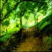 Gates to Paradise