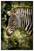 Stripes !