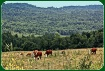 Adirondack farmla...