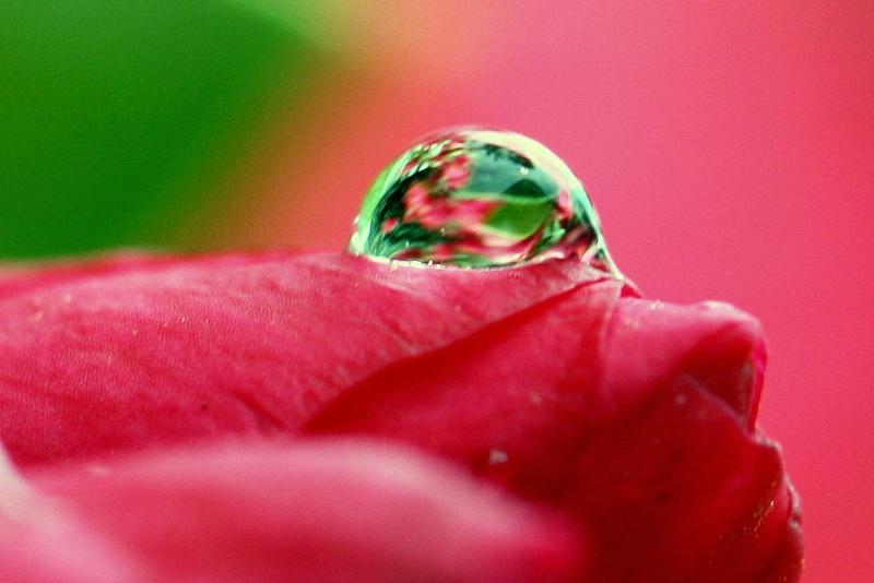 World Within A Raindrop