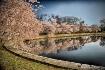 Cherry blossom re...