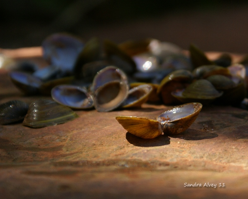 Shells in the Shade