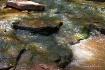 River Runs Throug...