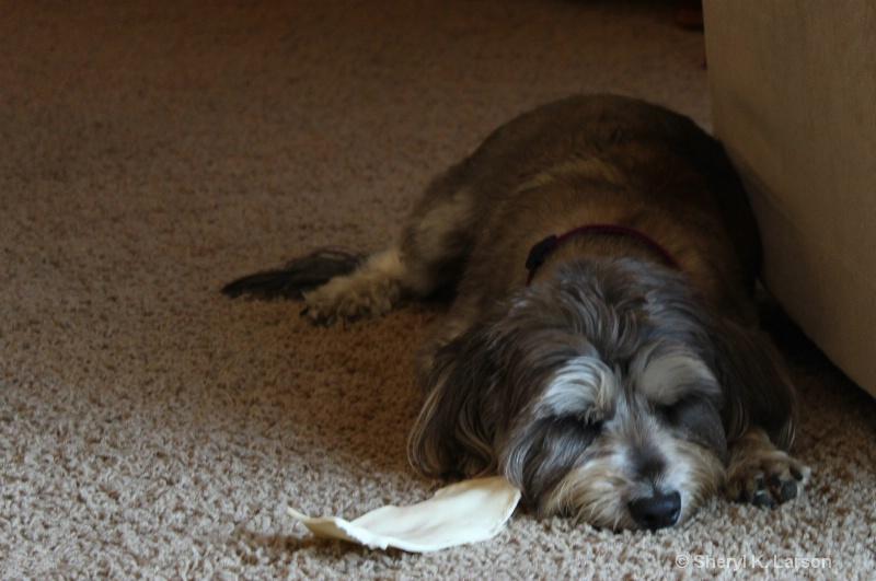 Dog Tired - ID: 12917641 © Sheryl K. Larson