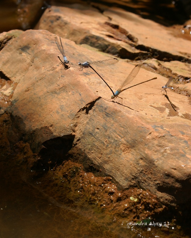 Bugs Like Water