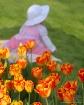 ~Tulip Baby~