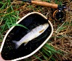 Fly Rods and Brow...