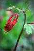 Spring  Wildflowe...