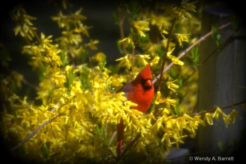 Bird of HOPE soft - ID: 12962581 © Wendy A. Barrett