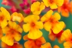 Flowers in soft f...