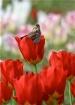 bird in bloom