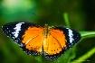 Butterfly Park @ ...