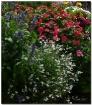 Plant Your Garden...