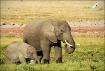 Amboseli Elephant...