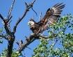 Spread Eagle!