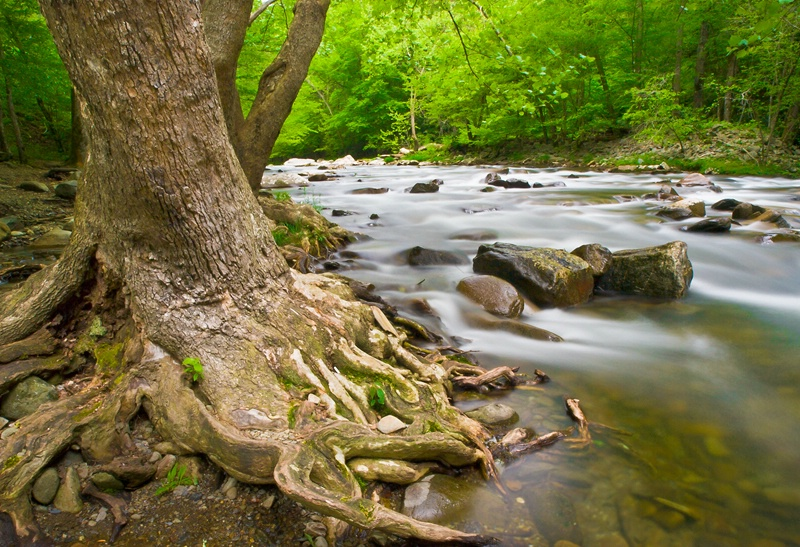 Woods and Water - ID: 13062308 © Philip B. Ludwig